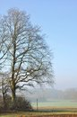 Large oak tree in winter Stock Photography