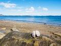 Large Open Shell On Rock, Ocea...