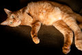 Large orange cat housecat lying on his side image orientation is horizontal and there is copy space Stock Photos
