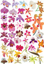 Large orchid collection Royalty Free Stock Photo