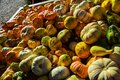 Pumpkins And Gourds In A Pile