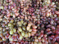 Large pile of red green grapes on display at farmers market in san francisco Stock Image