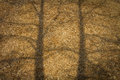 Large pile of wood chips with tree shadow at a plywood processing plant shadows Stock Image