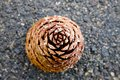 Large pine cone on paved road background Stock Photo