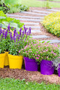 Large plant pots with flowers in the garden close up Stock Photography