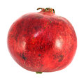 Large red fruit pomegranate Stock Images