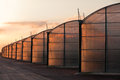Large scale commercial greenhouse illuminated orange glow setting sun Stock Image