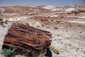 Large section of petrified wood at petrified forest national par park Stock Photo