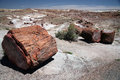 Large section of petrified wood at petrified forest national par the park arizona Stock Images
