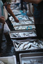 Large selection of fresh fish Royalty Free Stock Photo