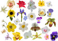 Large set of isolated flowers Royalty Free Stock Photo