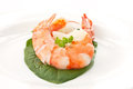 Large shrimp Royalty Free Stock Photo