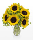 Large Sunflowers in a Vase on White Space Royalty Free Stock Photo