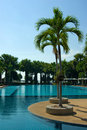 Large swimming pool with palm tree Stock Photos