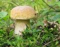 Large tasty mushroom Stock Image