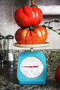 Large tomatoes on a scale Royalty Free Stock Photo