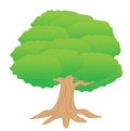 Large tree with a green crown on white background vector illustration Royalty Free Stock Images
