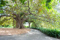 Large Tree, Royal Botanical Gardens Royalty Free Stock Photos