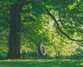 Large Tree With Tire Swing Royalty Free Stock Photo