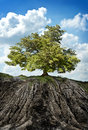 Large tree weathered eroding mountainside concept special place last tree Royalty Free Stock Photos