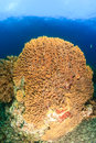 Large underwater sponge sea on a coral reef Stock Images