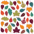 Large vector set of abstract autumn leaves stylized or Royalty Free Stock Image