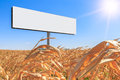 Large white billboard free from text on a cornfield on a background of blue sky and bright sun Royalty Free Stock Photo
