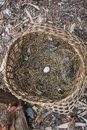 Wicker basket with chicken egg. Royalty Free Stock Photo