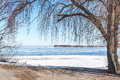 Large willow on bank of frozen river Royalty Free Stock Photo