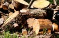Large Woodpile For Forestry Industry. Big pine and Spruce wood stacked logs laying Royalty Free Stock Photo