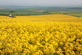 Large yellow rape field in Dorset in the Spring Stock Photos