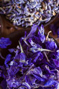 Larkspur petals closeup on Royalty Free Stock Photos