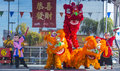 Las vegas chinese new year feb lion dance performance during the celebrations held in nevada on february Royalty Free Stock Photos