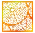 Laser cutting square panel. Openwork natural pattern with section of citrus fruit. Perfect for gift box silhouette ornament, wall