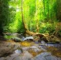 Lasowa fotografia halna rzeka i mechaci kamienie Obraz Royalty Free