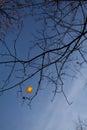 Last autumn leave on tree against blue sky Stock Image