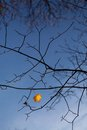 Last autumn leave on tree against blue sky Royalty Free Stock Images