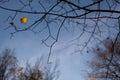 Last autumn leave on tree against blue sky Royalty Free Stock Image
