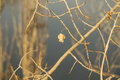 Last leaf on autumn tree branch sunlit close up single in park a closeup in sun Royalty Free Stock Image