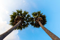 Last twin Coconut trees in the beach Royalty Free Stock Photo