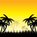 Lata tła whit palma trees Fotografia Stock