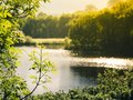 Late afternoon sun reflecting on a lake in spring. Royalty Free Stock Photo