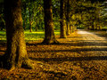 Late Afternoon Sun on Tree-Lined Gravel Road Royalty Free Stock Photo