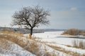 Late afternoon winter landscape with apricot tree Royalty Free Stock Photo