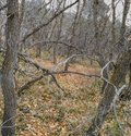 Late Fall panorama forest views hiking, biking, horseback trails through trees on the Yellow Fork and Rose Canyon Trails in Oquirr Royalty Free Stock Photo