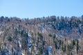Late Winter Fir Forest In Moun...