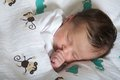 Latin newborn baby girl sleeping peacefully wrapped on animal blankets Royalty Free Stock Photos