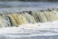 Latvia, Kuldīga. Fish (Vimba) swim to spawn, overcoming waterf Royalty Free Stock Photo