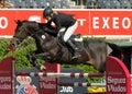 Laura Renwick in action rides horse Beluga Li Royalty Free Stock Photo