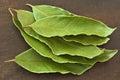 Laurel dry leaves laurus nobilis on wooden background Stock Image